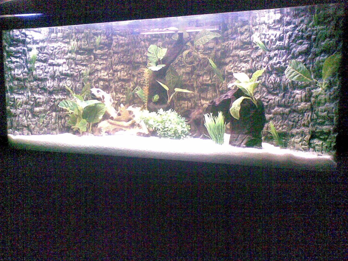 fish tank picture - Its a Corner Tank build on round staircase corner with 5Ft Front and 2Ft Height , external Canister Filter, 2 Floral 40W and 1 Blue Light
