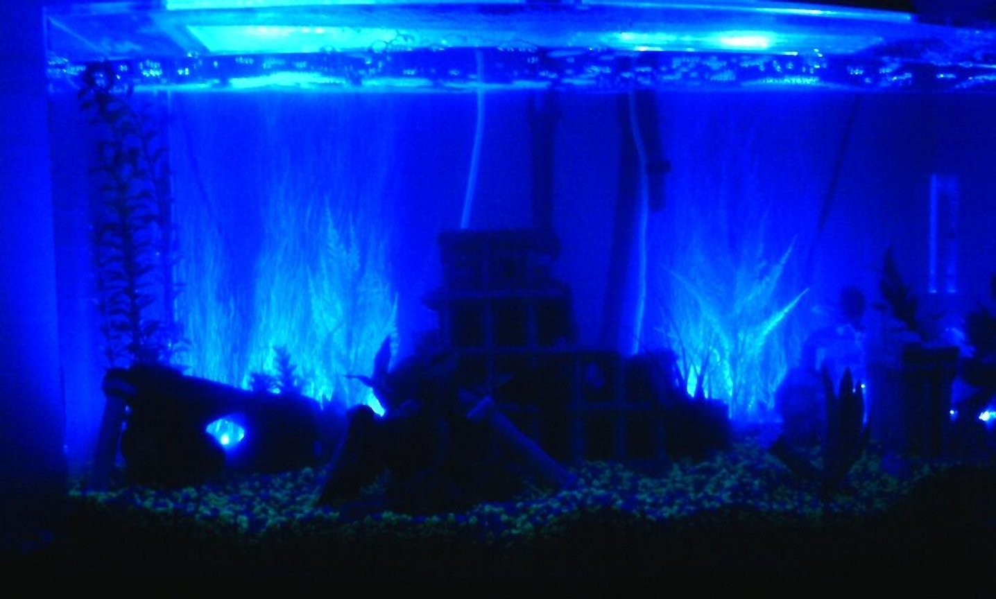 fish tank picture - 46 Gallon Acrylic Bowfront Tank