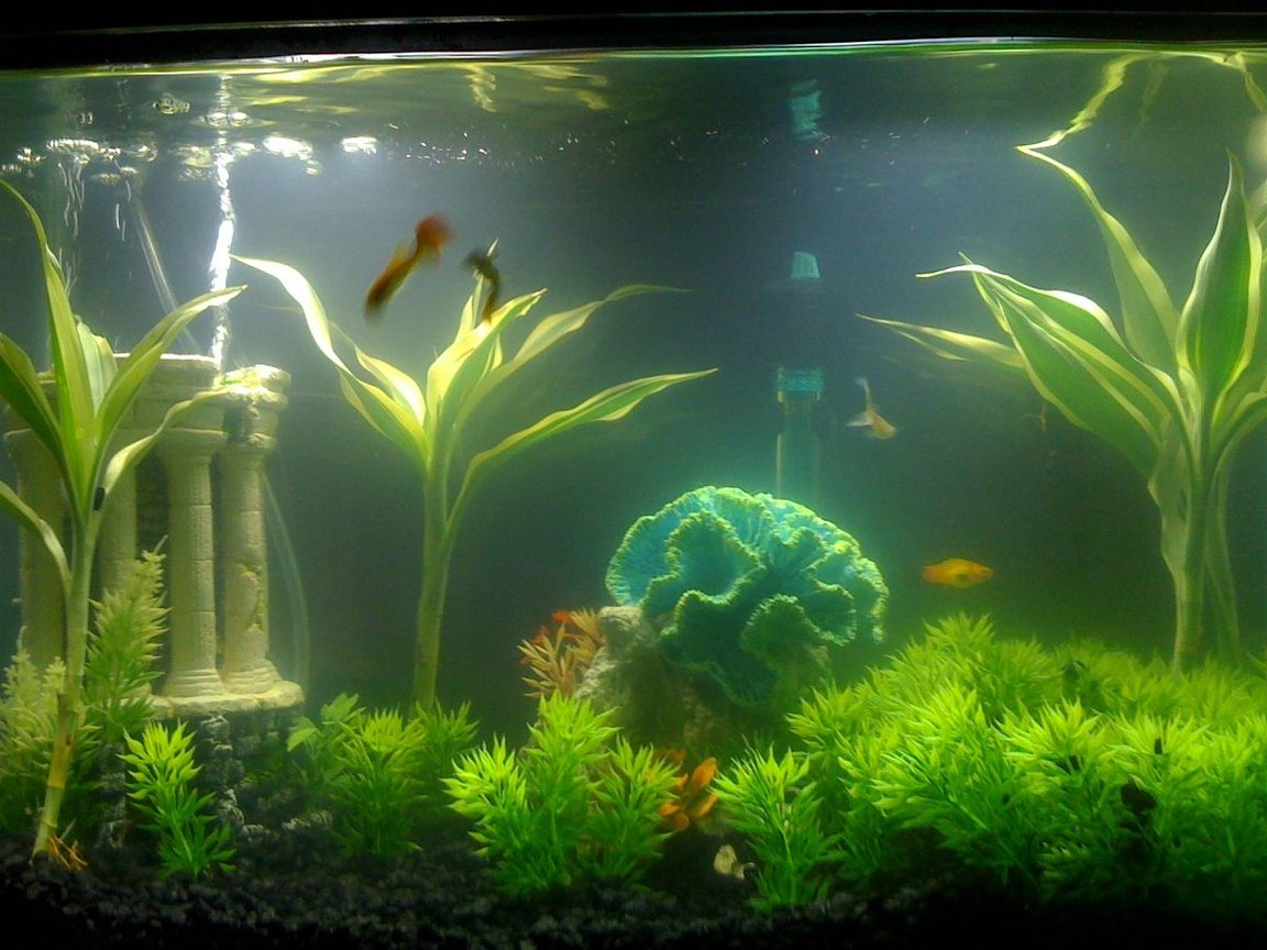 fish tank picture - Iv added some ground cover, and bought a new Sunset Barb Platy... I think its coming along nicely...