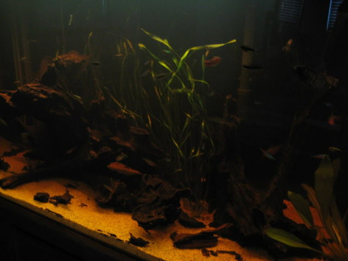 fish tank picture - mo