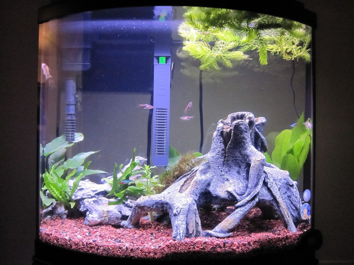 fish tank picture - 4 Weeks @ 99% Stocking