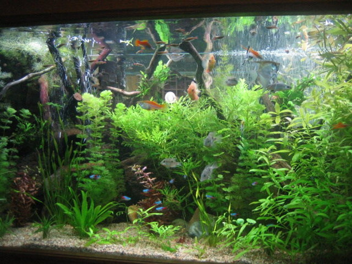 fish tank picture - plants going on