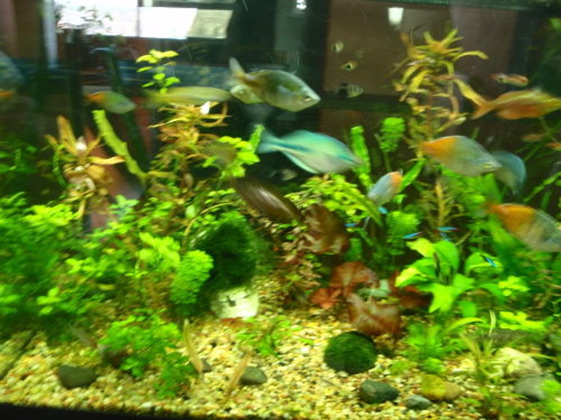 fish tank picture - rainbows