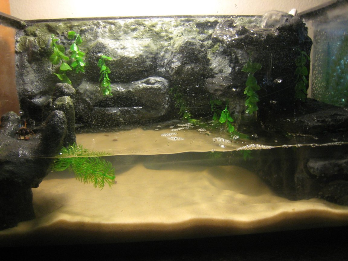 fish tank picture - This is my DIY crab tank, 10 Gal. Built back wall and waterfall. Internal filter that took me forever to fit perfectly. Built the hand on the left. Currently have 16 fiddler crabs. NEVER SCENE ANYTHING LIKE THIS!!!! Stupid sight wont approve this picture to be rated on a different account. I would love to get a rating on it and see what people think. I guess ill have to settle for non rated. POST COMMENTS PLEASE!!!