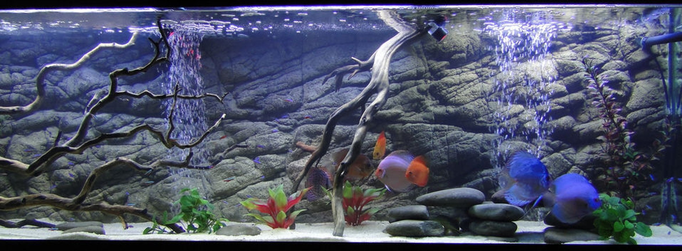 fish tank picture - The fish