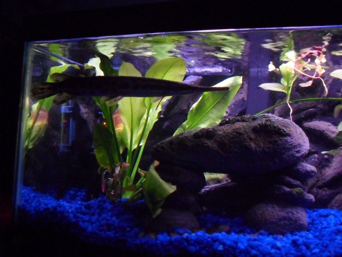 fish tank picture - Thing looks mean