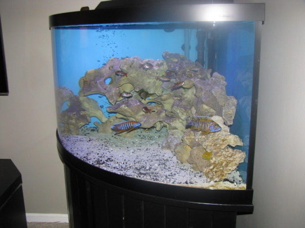 fish tank picture - view from right side