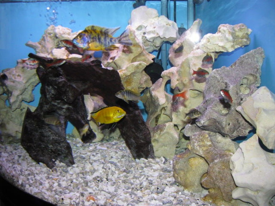 fish tank picture - Added a few more fish. all juvenile. seems to be working out.