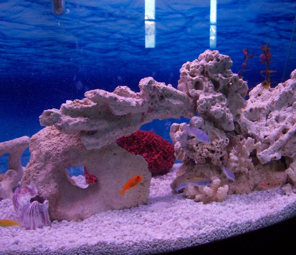 fish tank picture - Our tank 2
