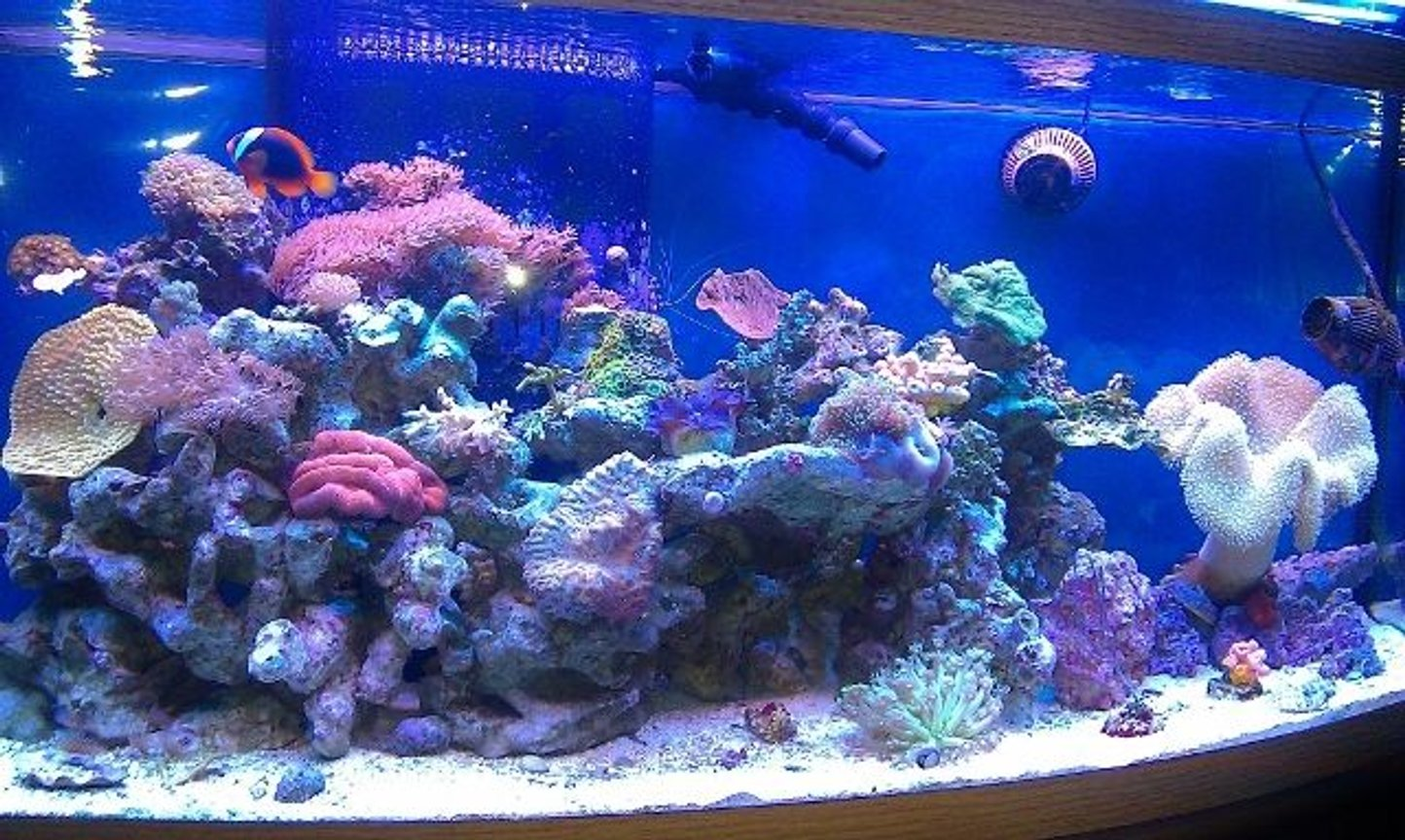 fish tank picture - Reef Tank