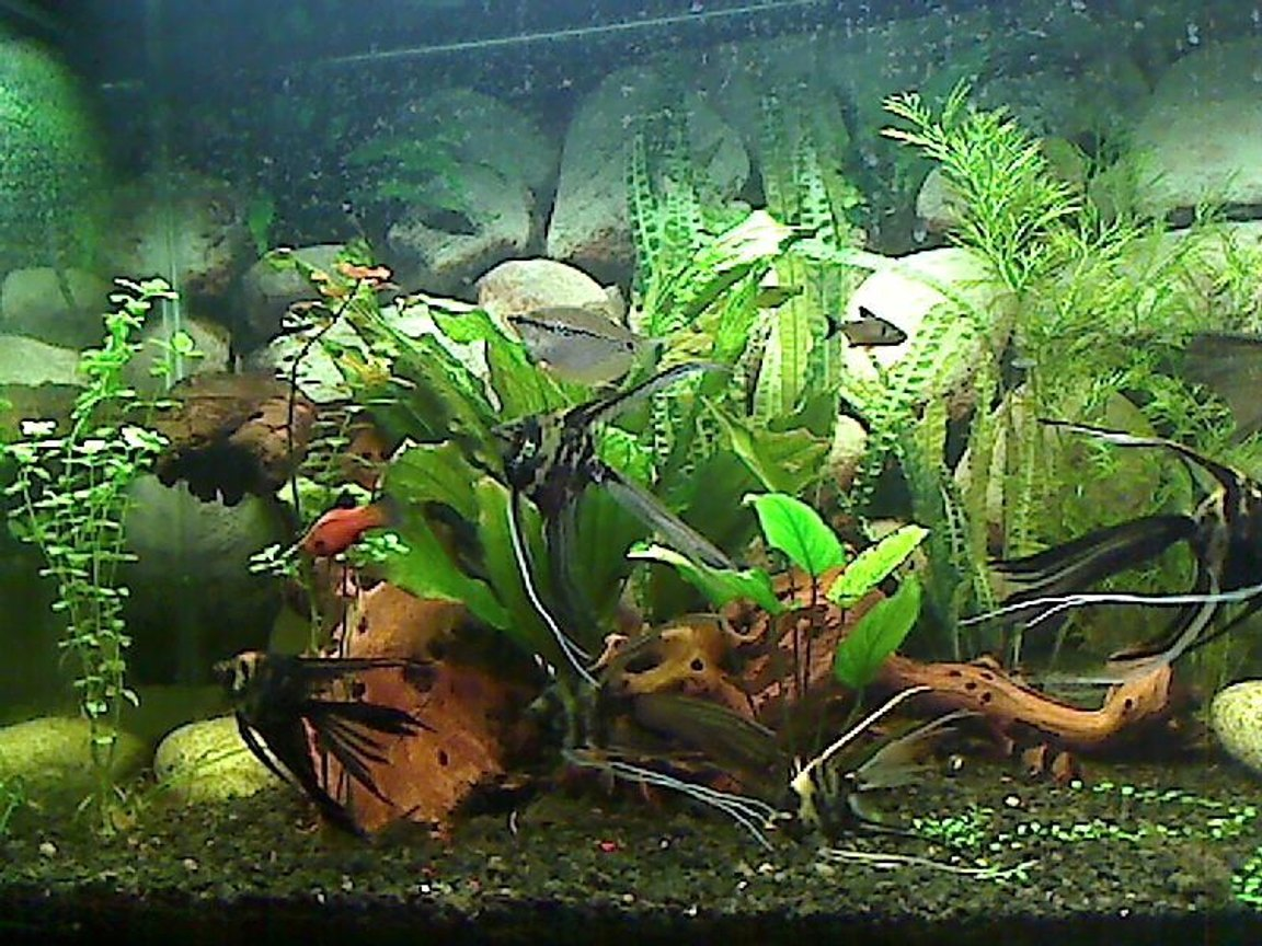 fish tank picture - this is the left part of my tank