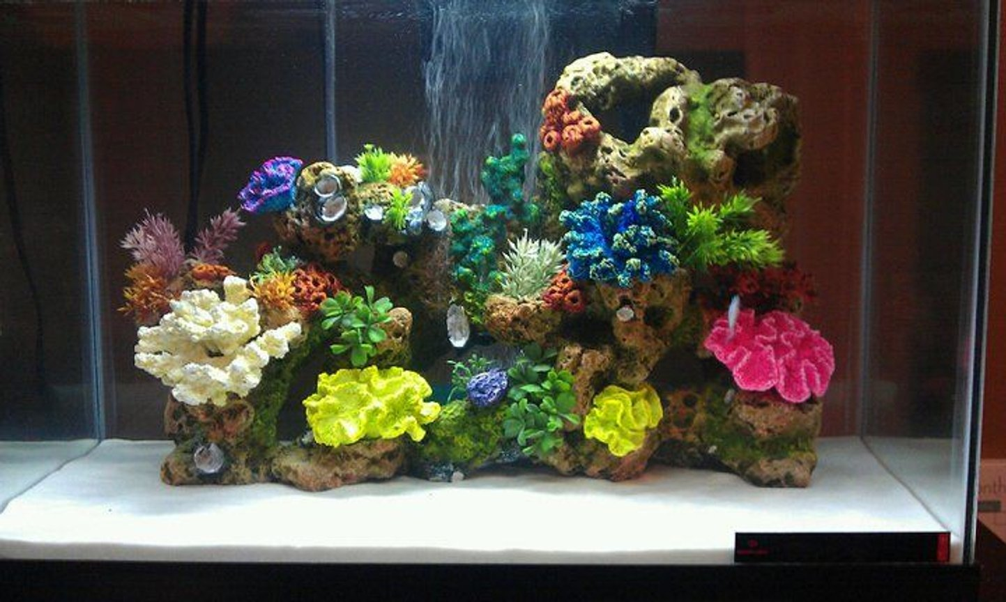 fish tank picture - new 20 gallon