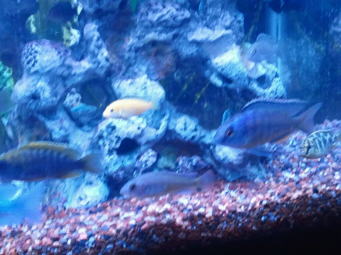 fish tank picture - African