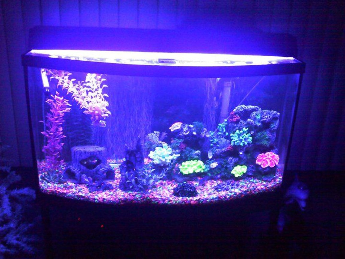 fish tank picture - blue