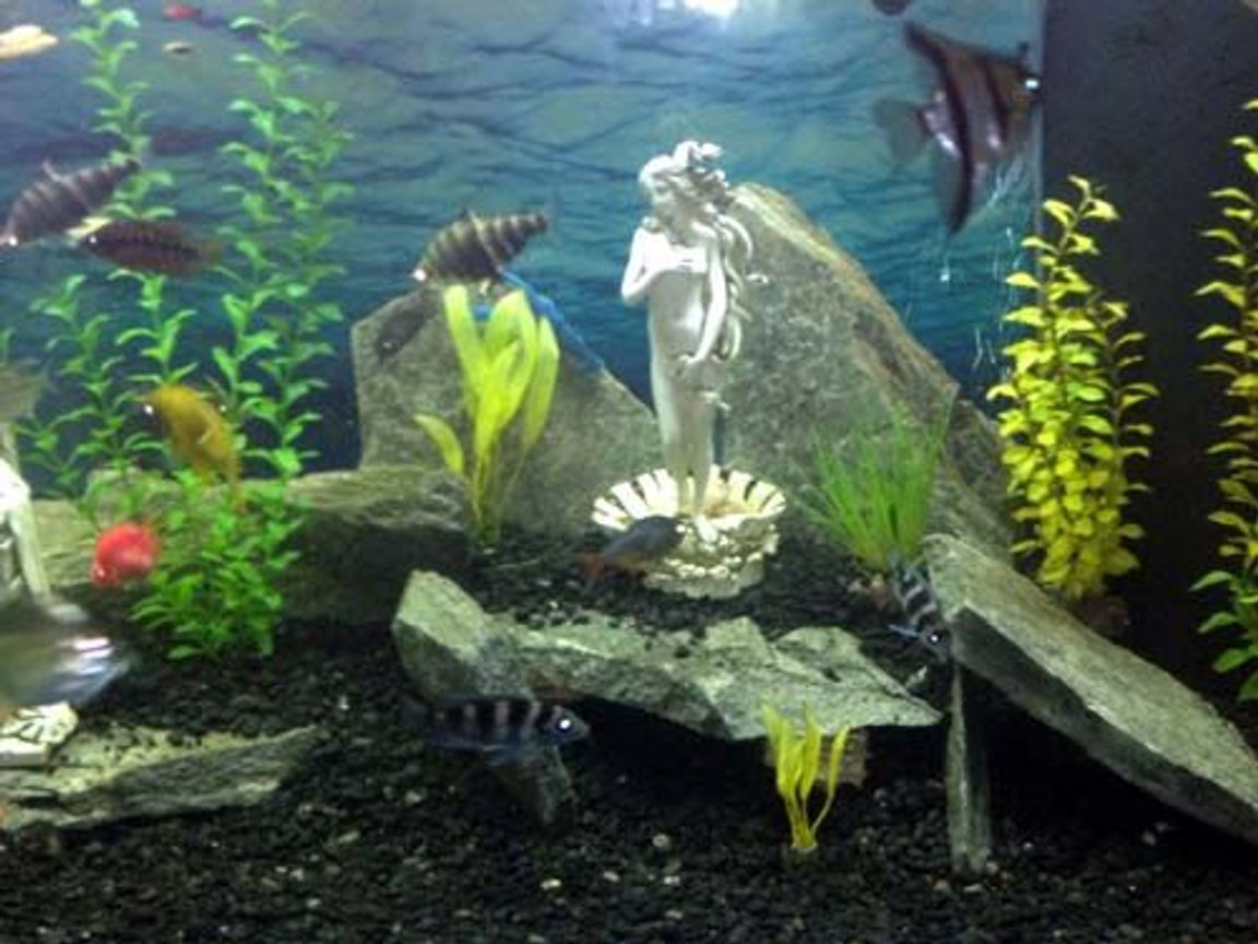 fish tank picture - Aphrodite Love Caves
