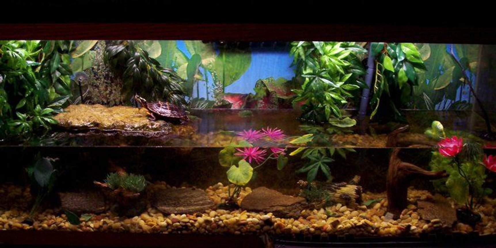 fish tank picture - Turtle Tank