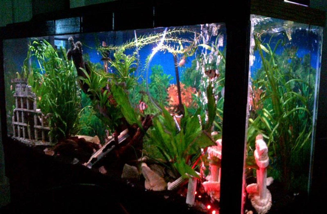 fish tank picture - right angle view