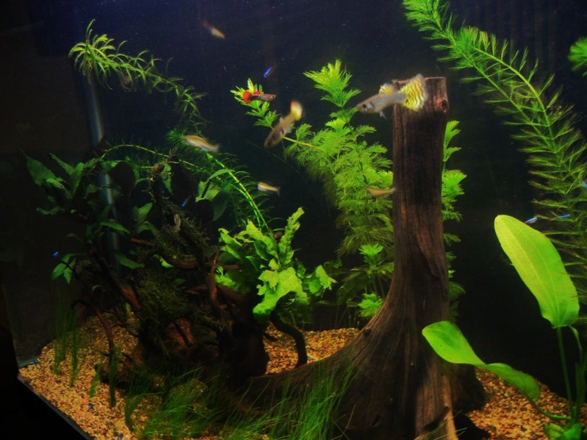 fish tank picture - Additional Photo 1