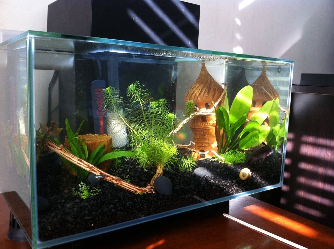 fish tank picture - In The sun Light