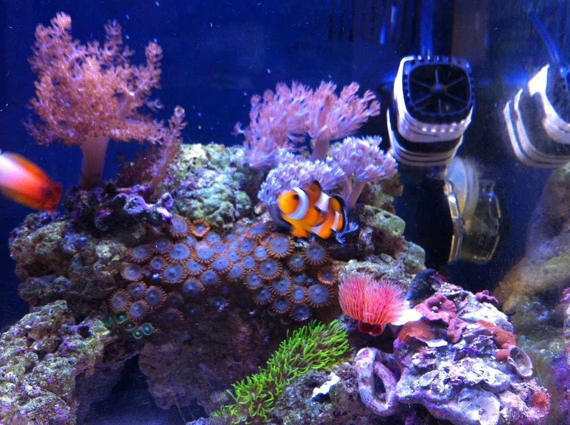 fish tank picture - Another shot taken by Nikon j1