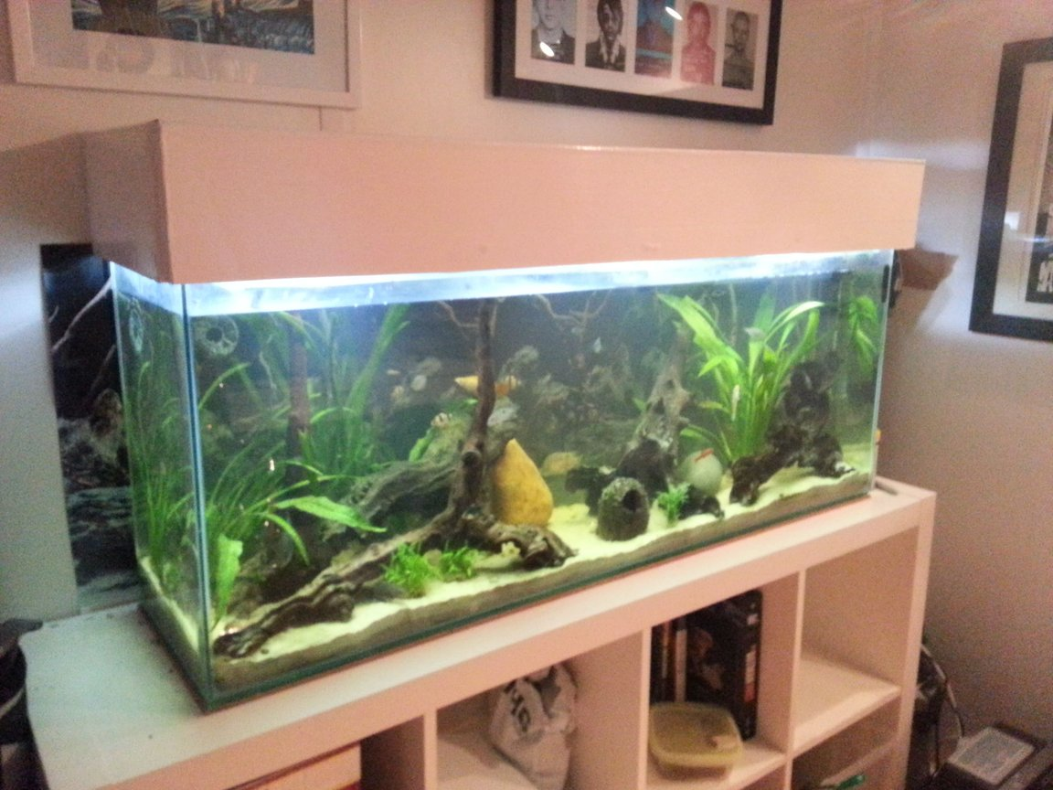 fish tank picture - 4ft river bed natural tank