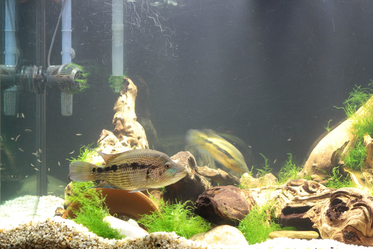 fish tank picture - close up