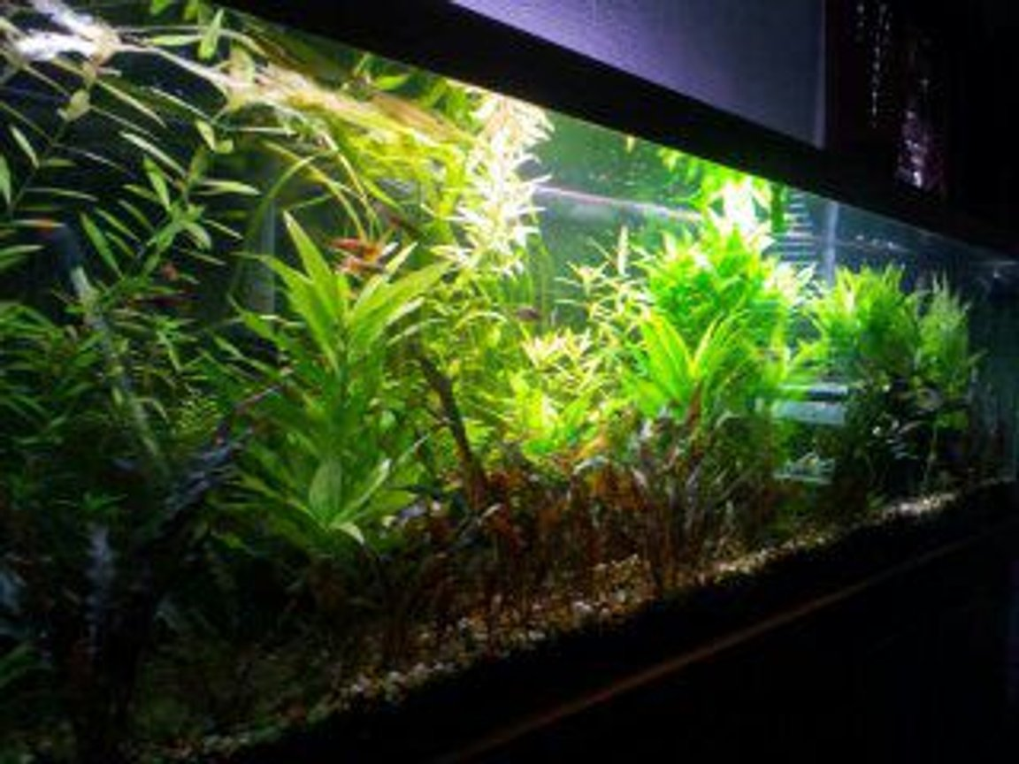 fish tank picture - angle view