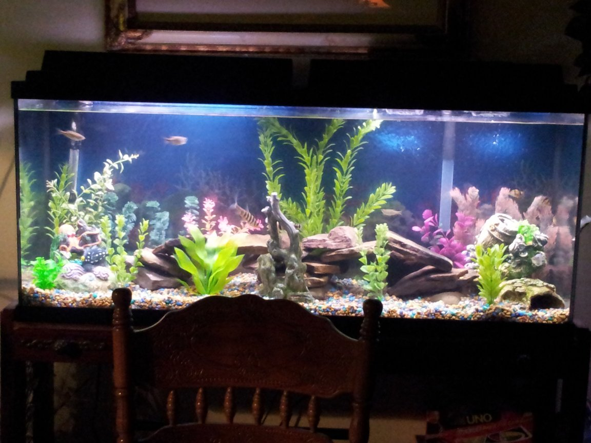 fish tank picture - Tank Recently updated. 1/29/13
