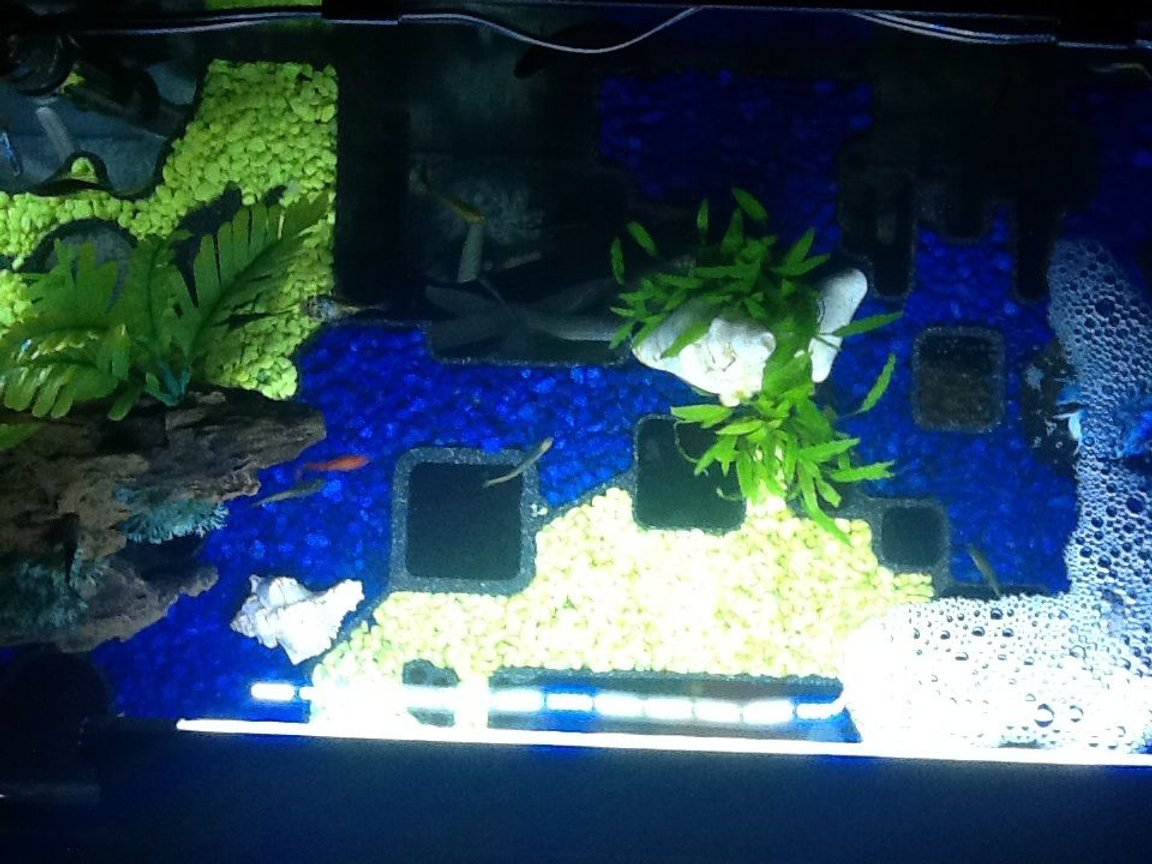 fish tank picture - 1/2 plan view