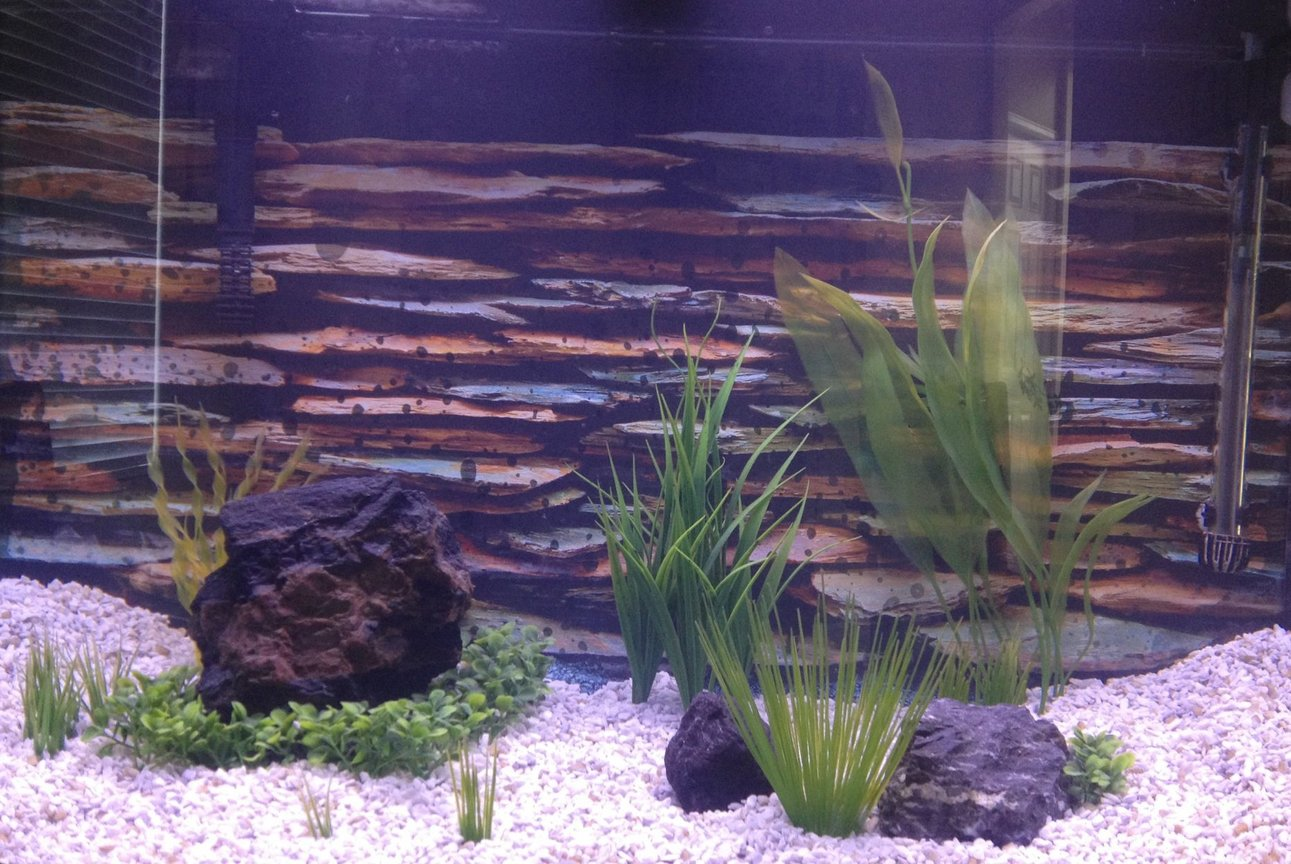 fish tank picture - Unoccupied at this point, new setup