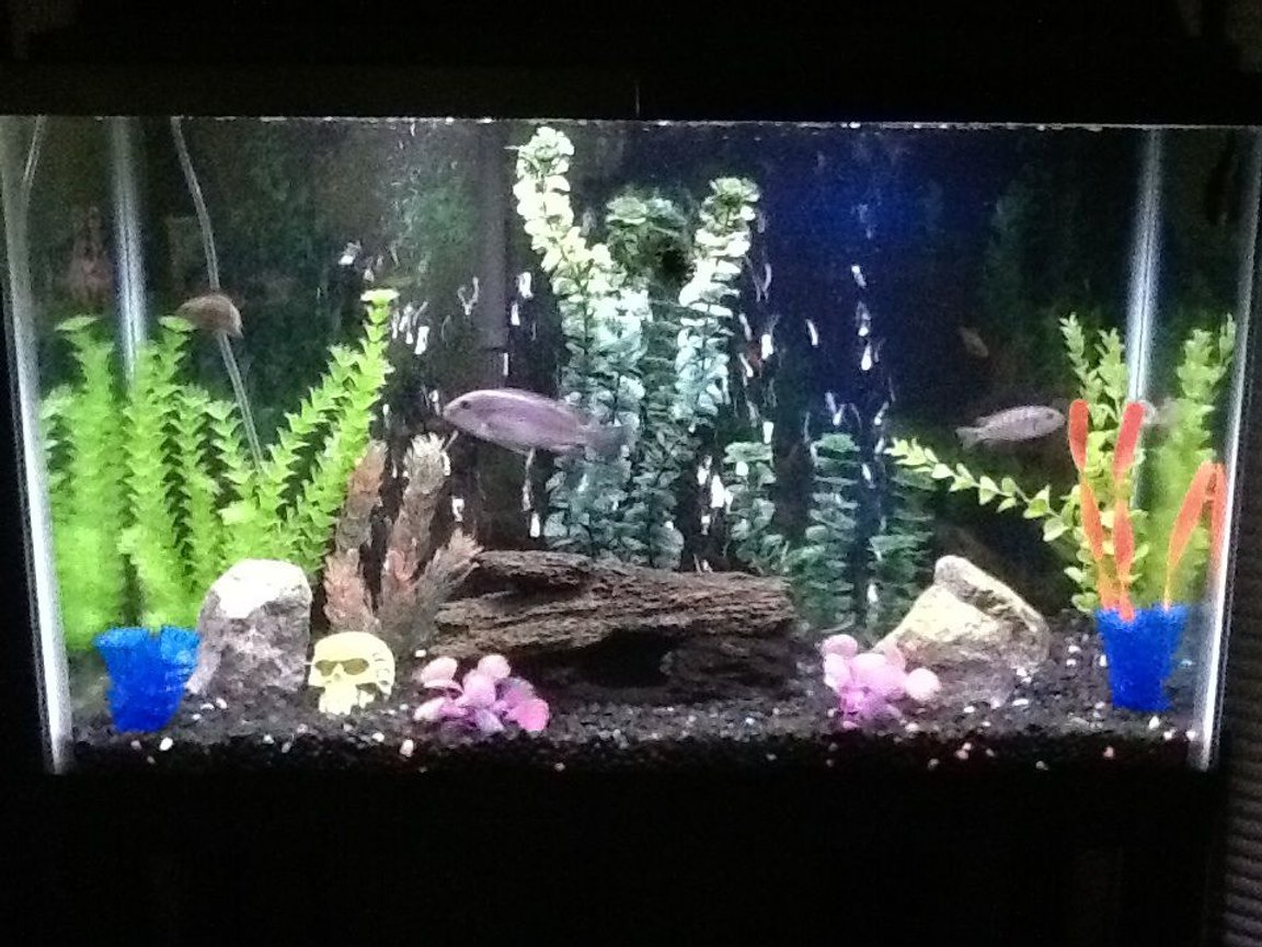 fish tank picture - Tank 1 better pic !!!