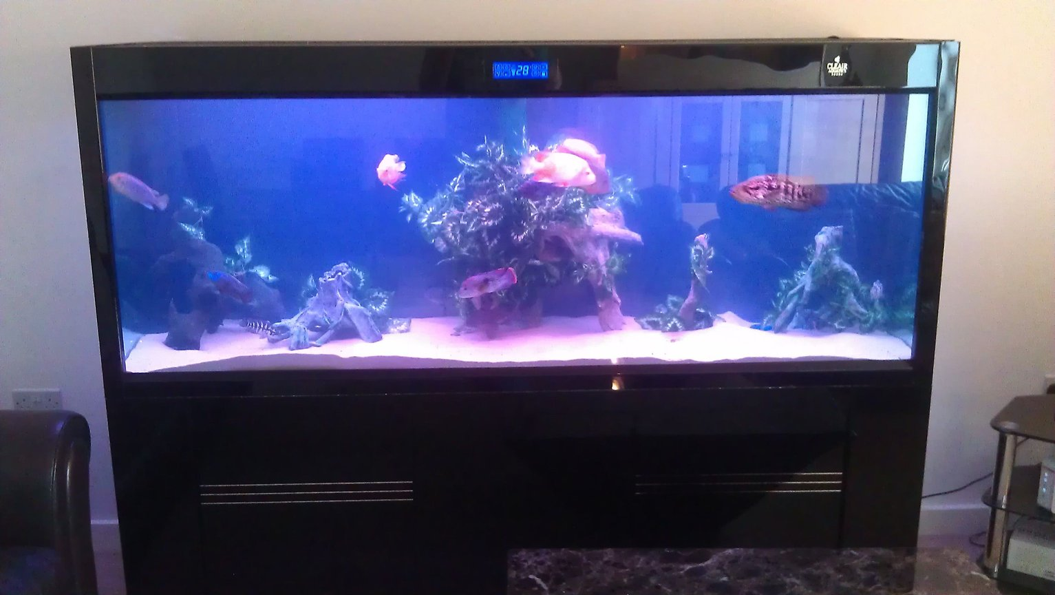 fish tank picture - Front view Maz2000