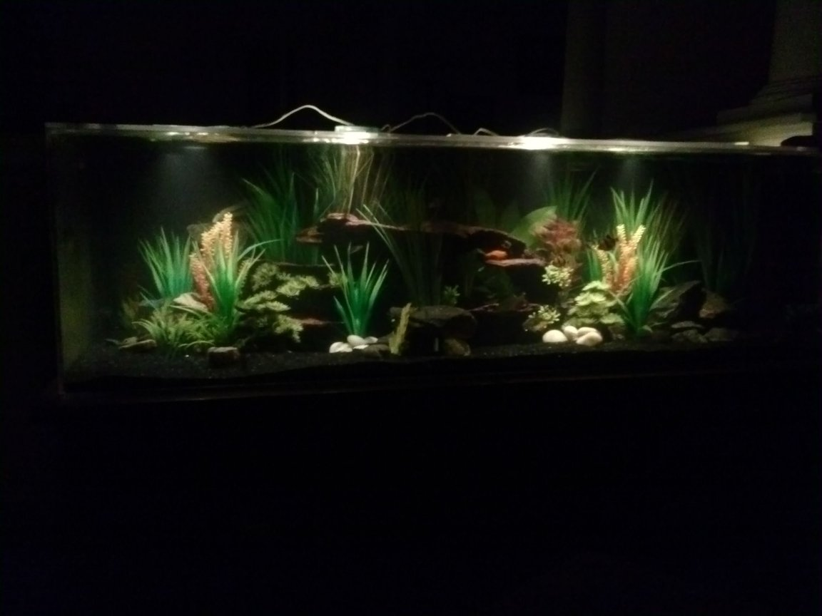fish tank picture - River Paradise #4