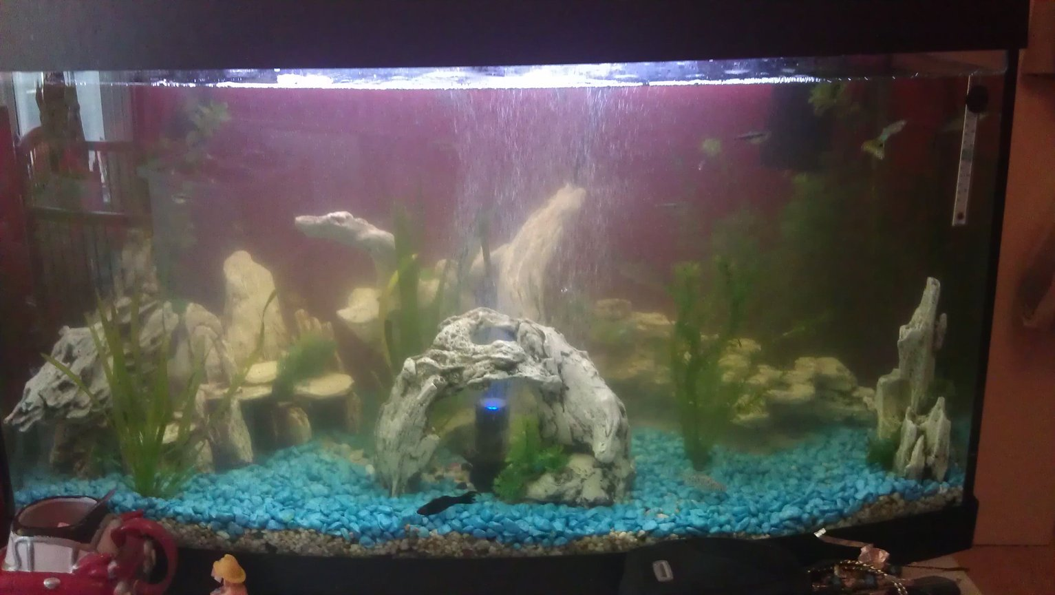 fish tank picture - Clearer now.