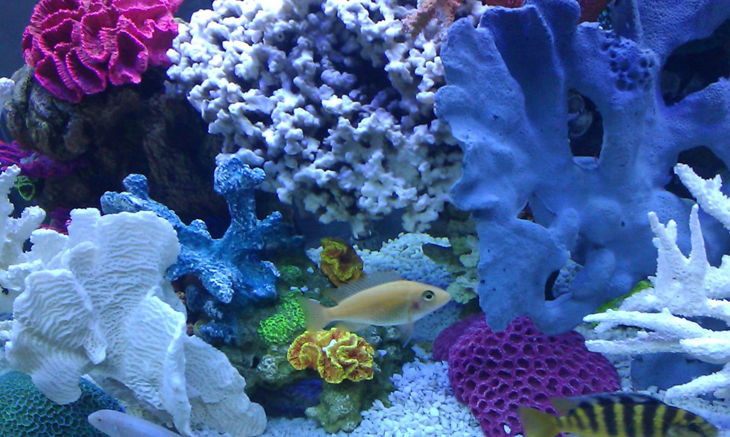 fish tank picture - Cruising the reef, life for him is good.