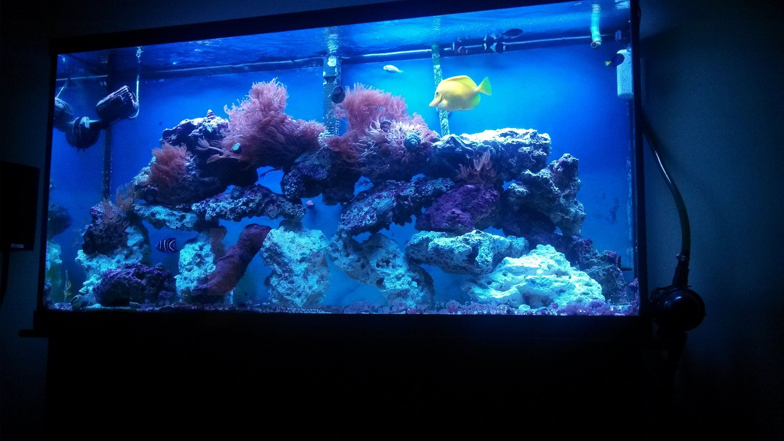fish tank picture - Let Me Know What You Think