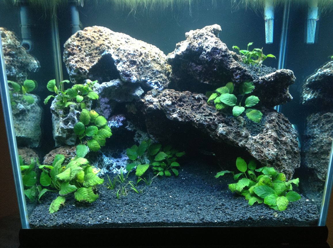 fish tank picture - Fish less so far