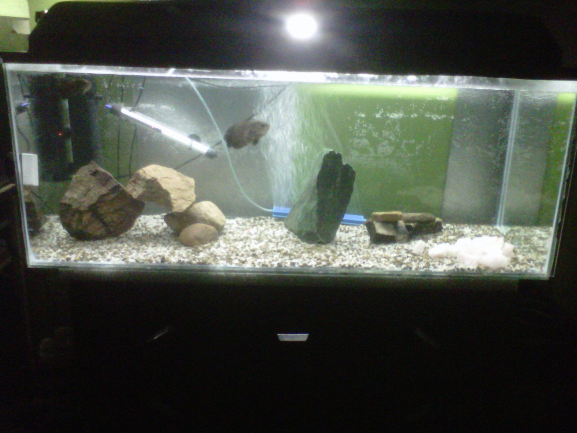 fish tank picture - My 300l tank started today for my two oscars an one pleco... Still not compleat but a work in progres