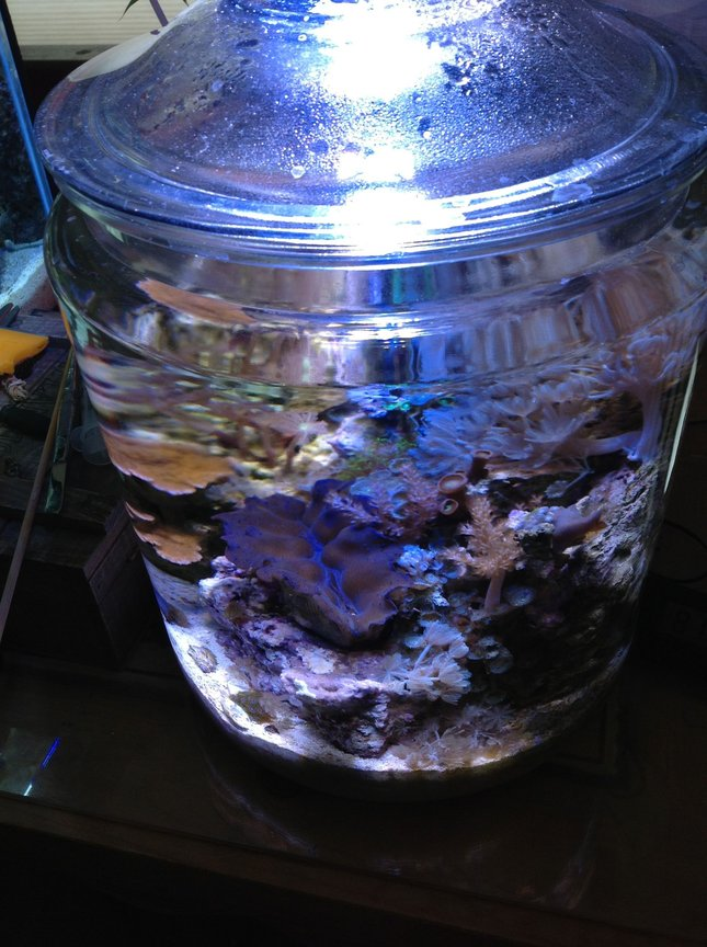 fish tank picture - More shots of the Jar
