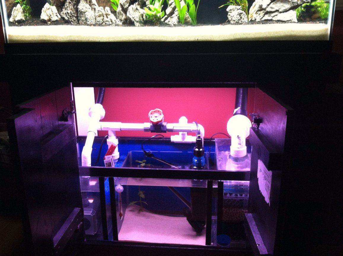 fish tank picture - Sump