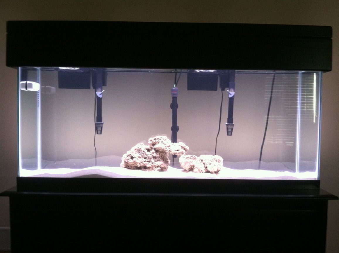 fish tank picture - 55gal African cichlid tank; still cycling