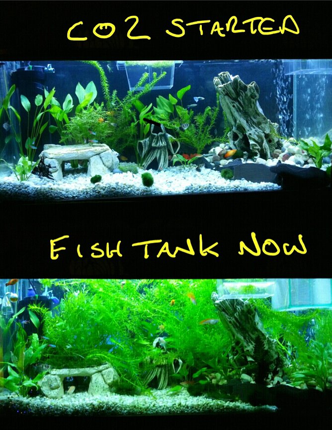 fish tank picture - this is how much of a difference co2 made to my tank.i have to trim my plants back weekly now, whereas before my plants did not grow