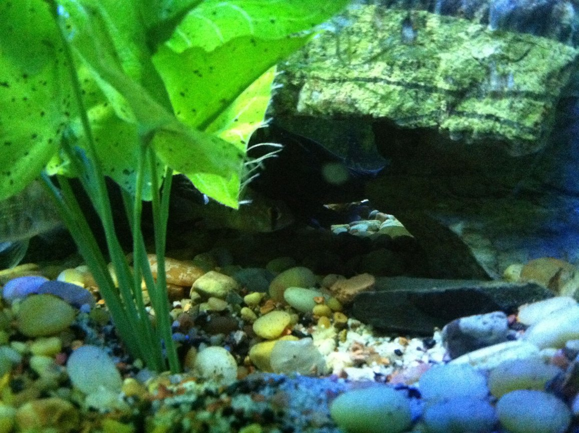 fish tank picture - Fish2
