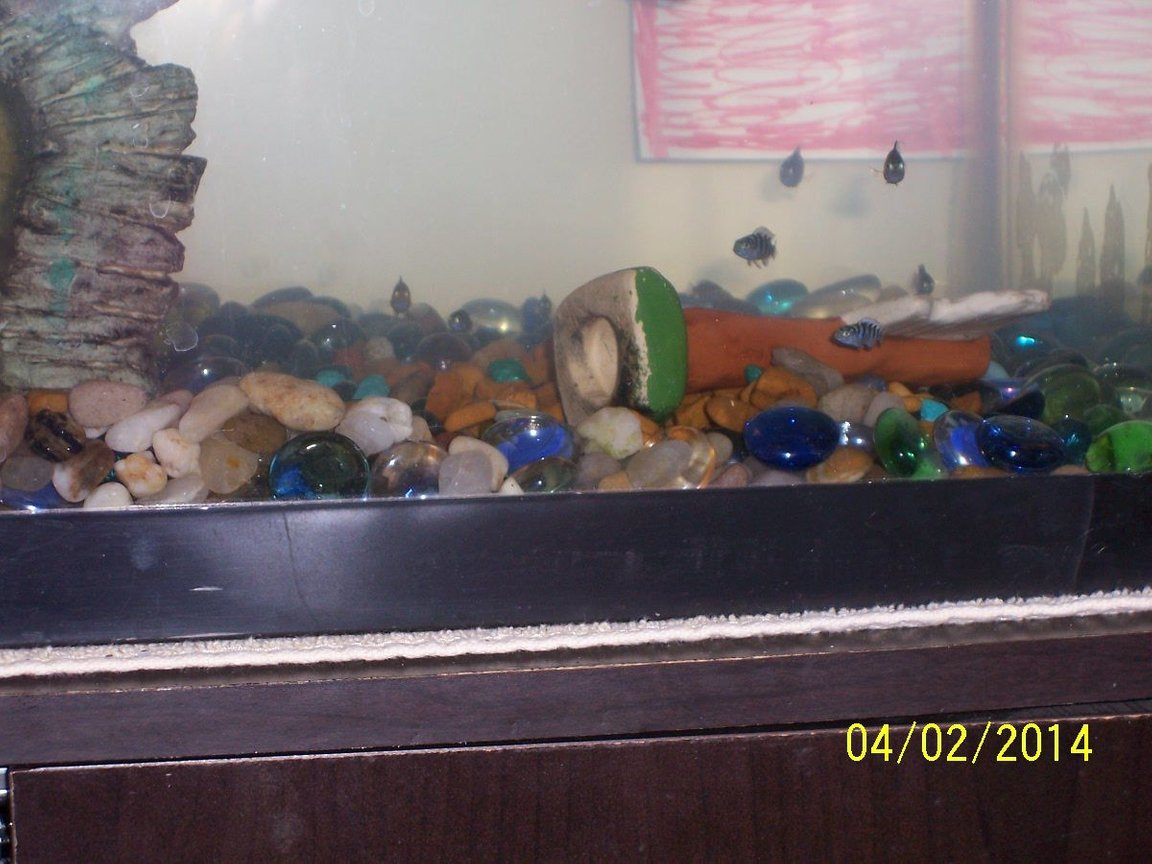 fish tank picture - Breeding tank showing fry.