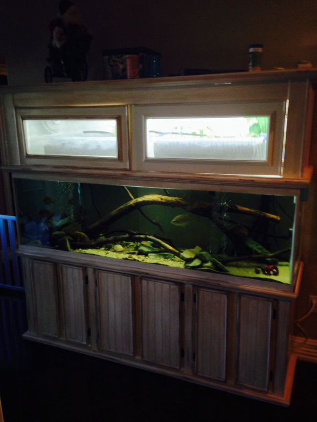fish tank picture - kinda shows my aquaponic system above the tank.