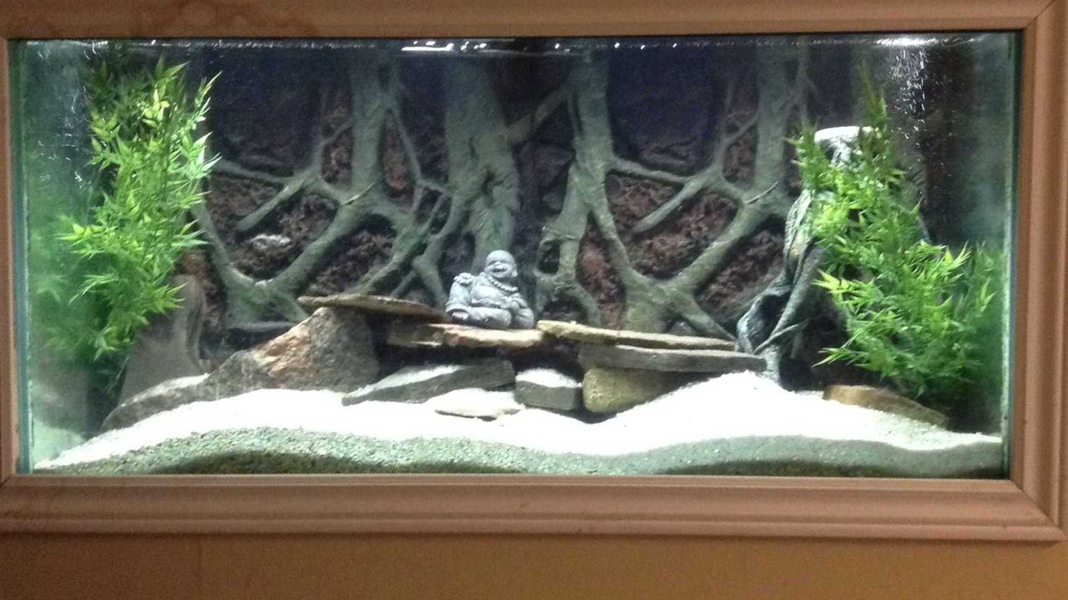 fish tank picture - Cichlids tank decorated after losing everything in ice storm