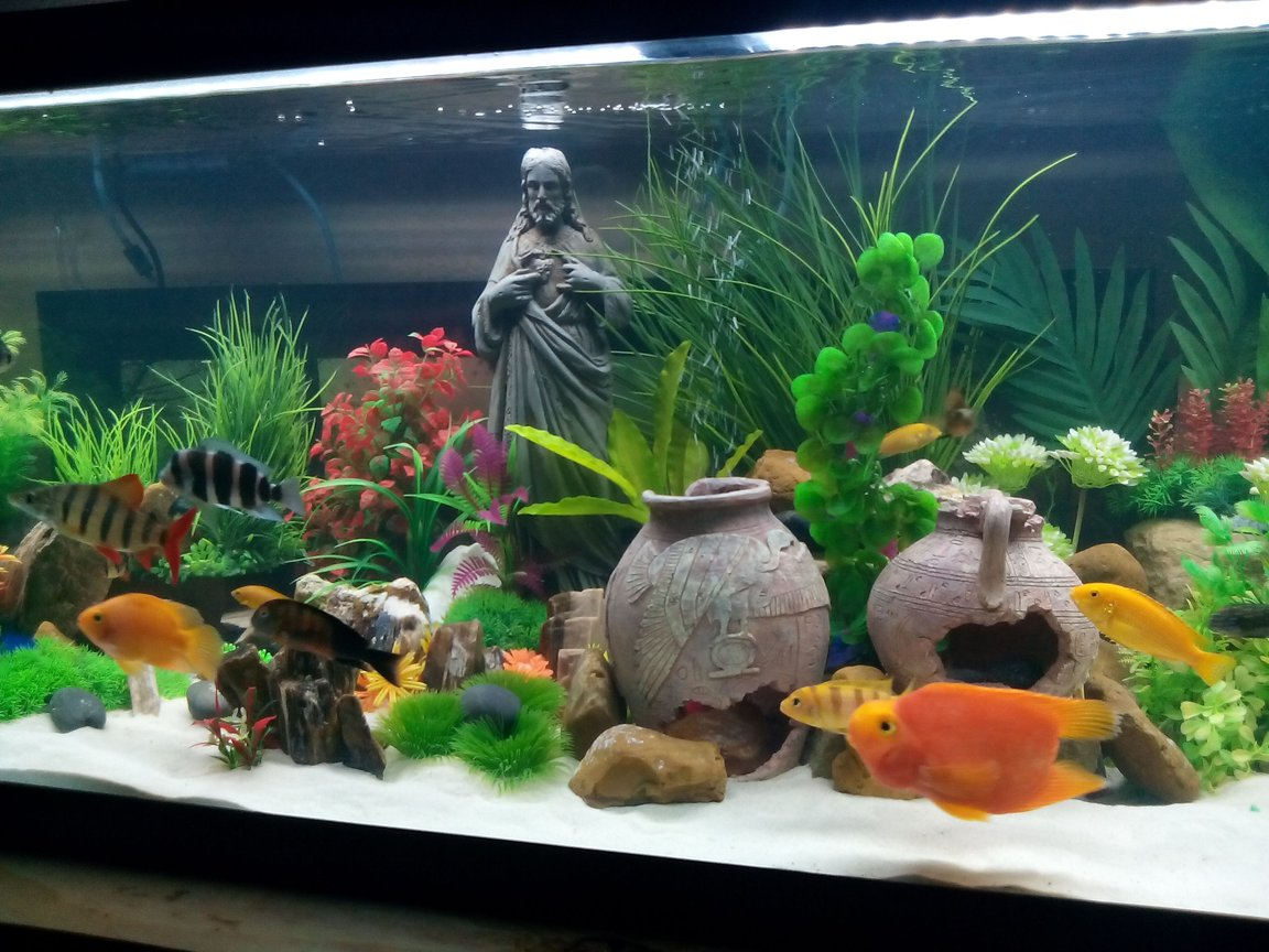 fish tank picture - Hope yall like it