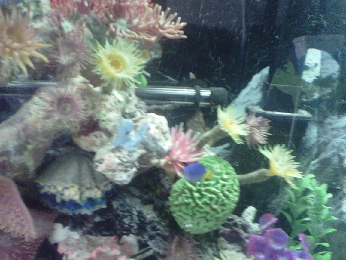 fish tank picture - 7