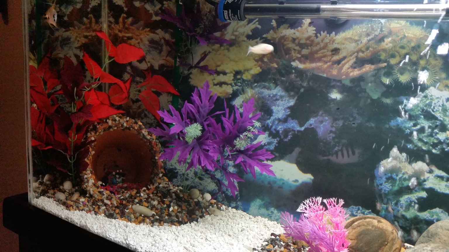 fish tank picture - 40 g Community Tank