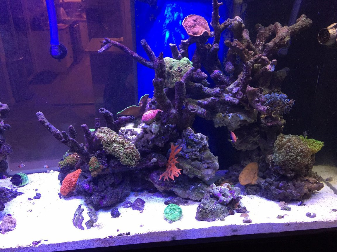 fish tank picture - Center